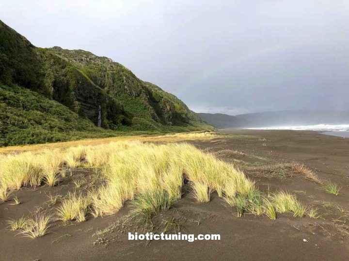 Valdivian rainforest wild beach